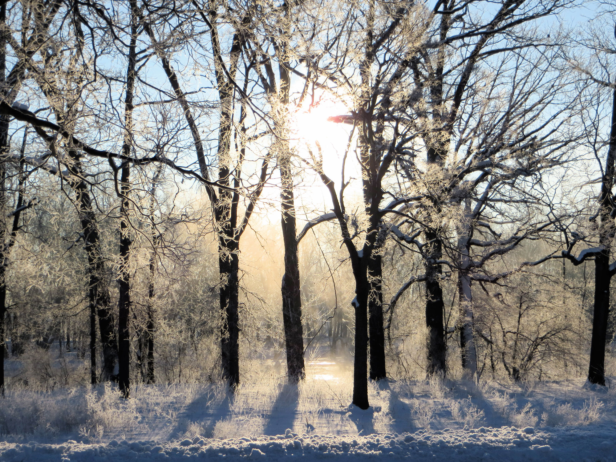 activeremedy-frost-on-trees