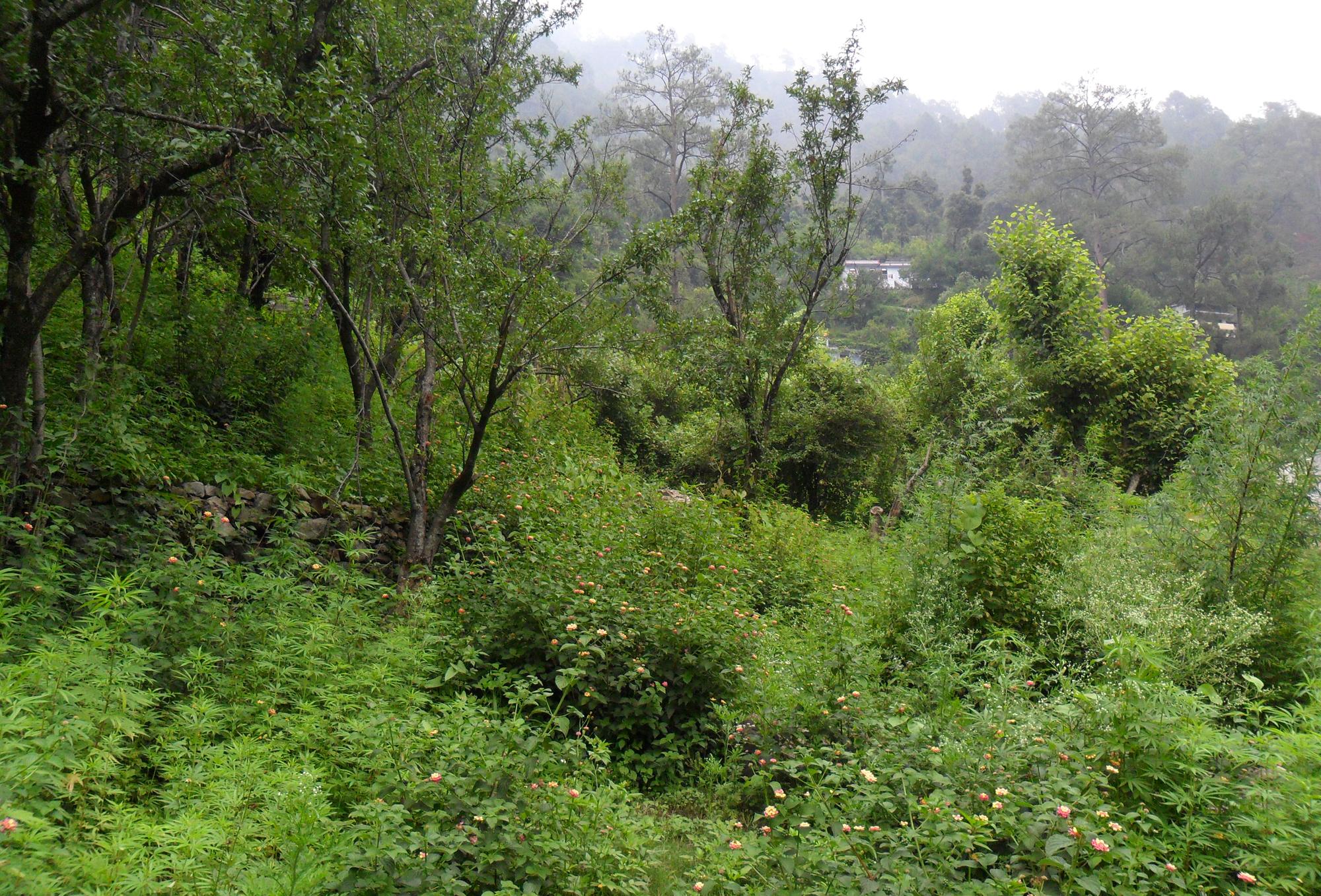 biodiversity-corridor