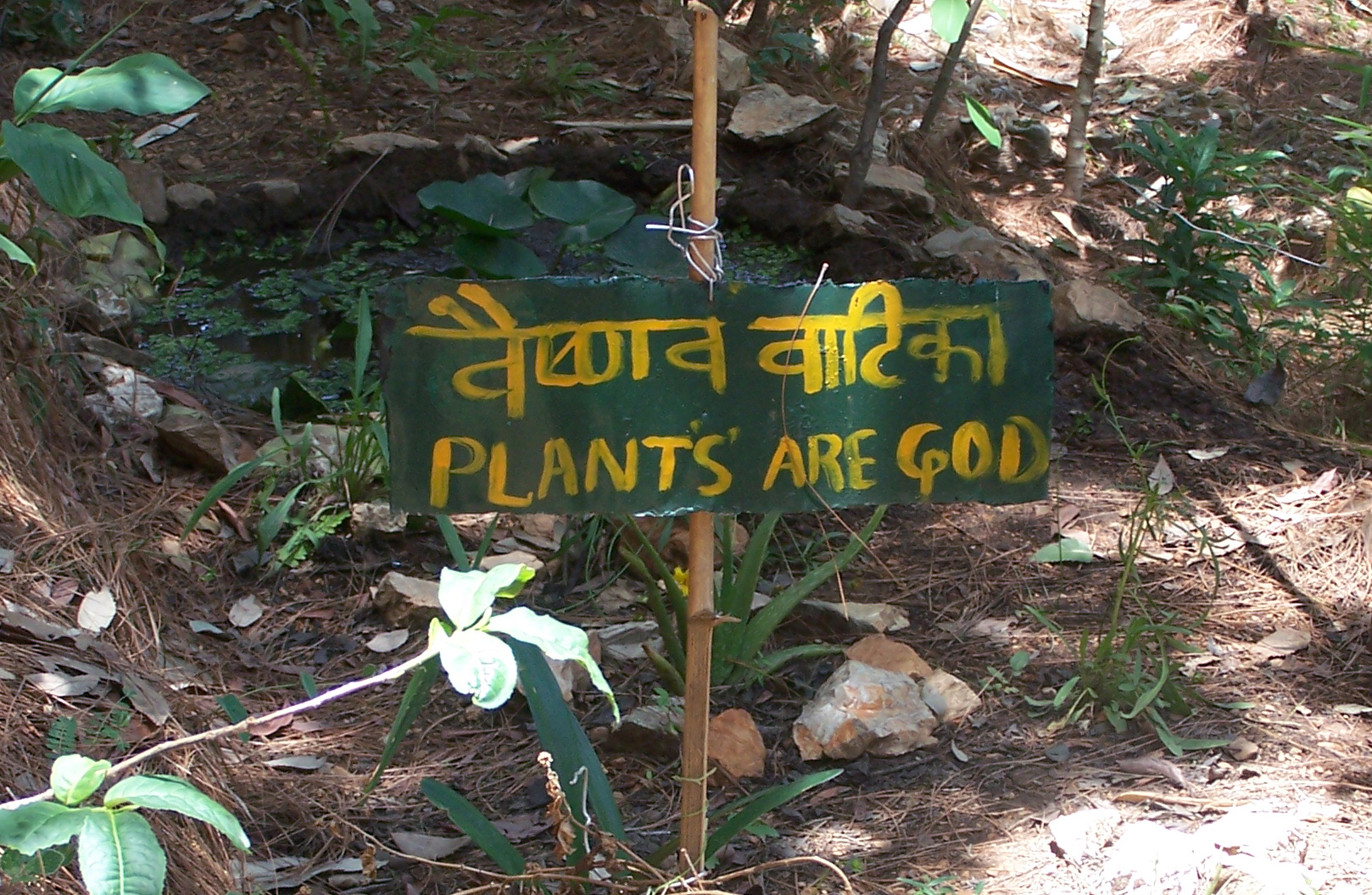 plants-are-god