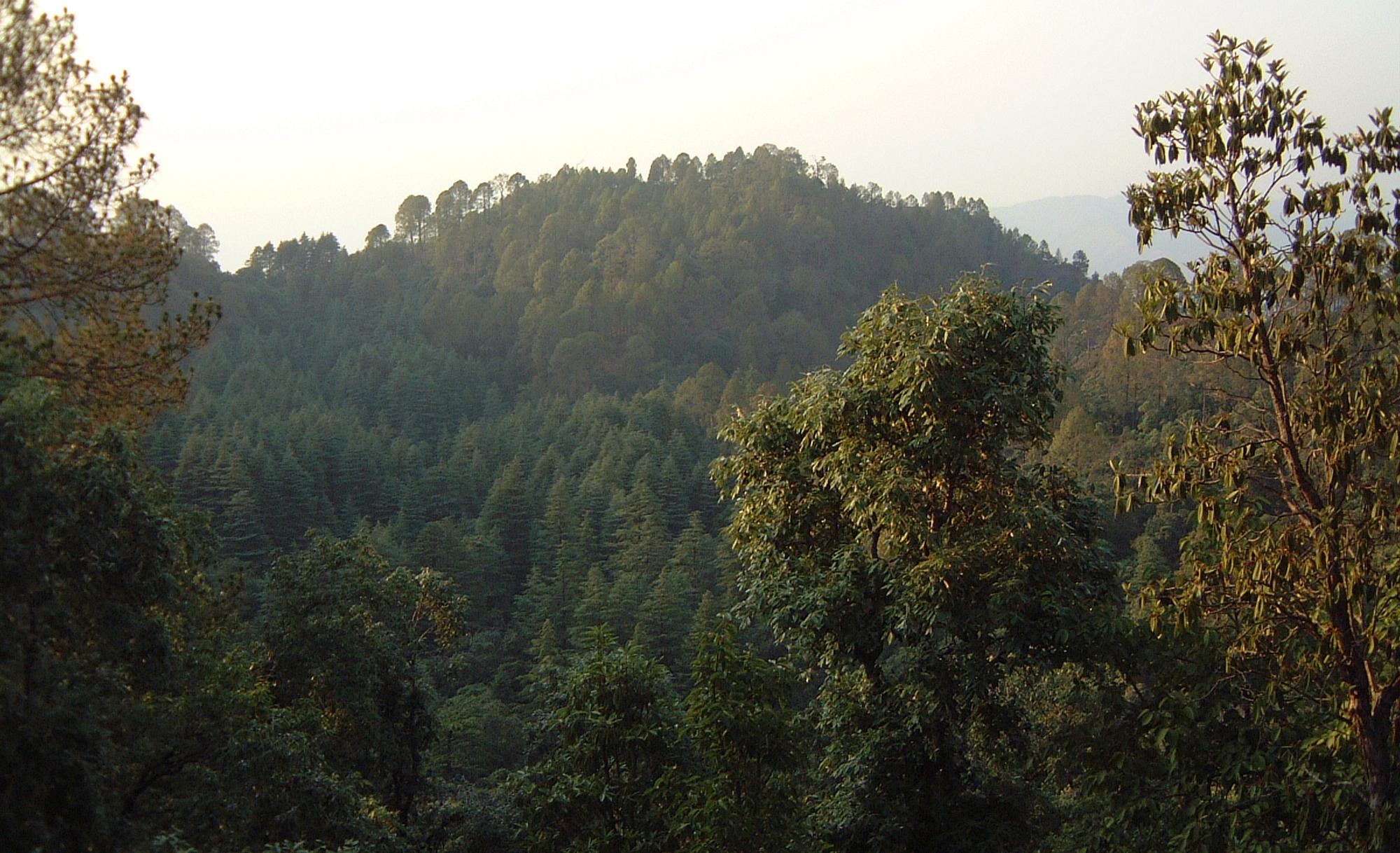 sacred-grove