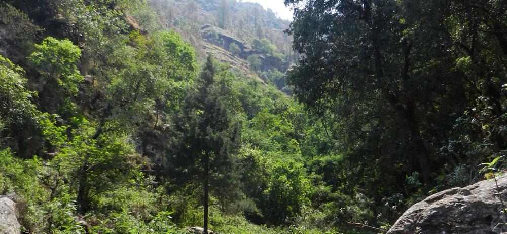 Bheruji-sacred-grove