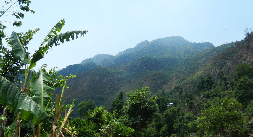 Hariyali-Devi-sacred-grove