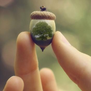 acorn-oak-small