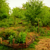 Permaculture for Working in Harmony with Nature